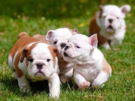 Как быстро и выгодно продать щенков и других животных
