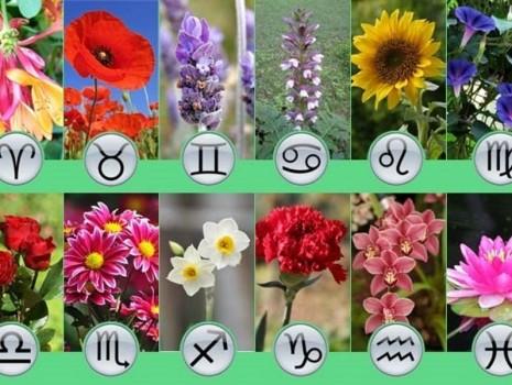 Цветочный гороскоп по дате и месяцу рождения
