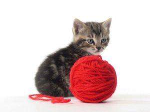 котенок с красным клубком