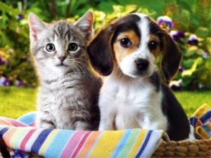 вечерний заговор на продажу щенков и котят