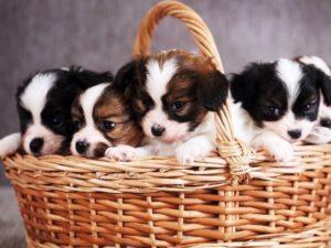 заговор на продажу щенков
