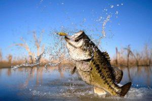 Заговор на первую рыбу