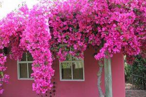 Надежная защита дома от негатива