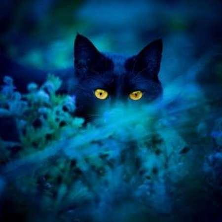 заговоры черной магии - виды заговоров