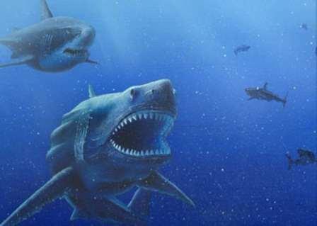 Амулет зуб акулы и его значение в защитной магии