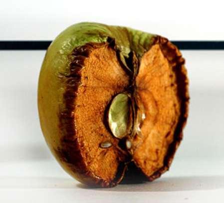 заговор от бородавок на яблоко