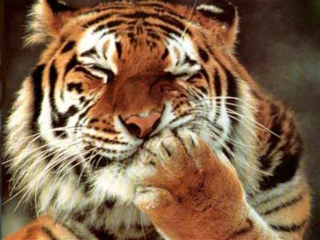 женщина стрелец тигр