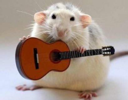 Мужчина Крыса - характеристика и совместимость в любви