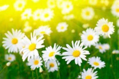 Гадание на цветках на любовь самостоятельно