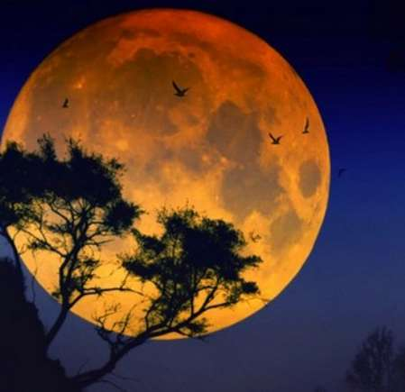 Прическаи Луна