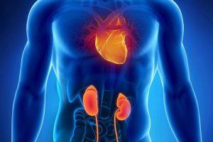 Лечение болезни почек и сердца настроями