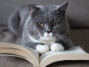Интересное гадание на кошке