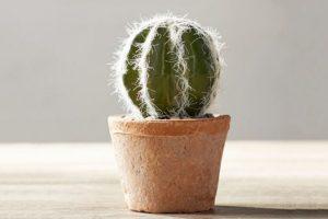 Цветы и растения привлекающие деньги в дом - кактус